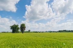 Rice bielu i pola chmury Obrazy Stock