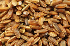 Rice bran shell  background Royalty Free Stock Images