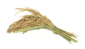Rice branch baldo Royalty Free Stock Photography