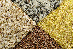 Rice, buckwheat, millet, porridge macro. Rice, buckwheat, millet, porridge very macro closeup Stock Images