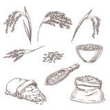 Rice cereal spikelets, grain in sack, porridge in bowl. Vector sketch illustration. Hand drawn isolated design elements vector illustration