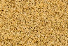 Rice chaff background Royalty Free Stock Images