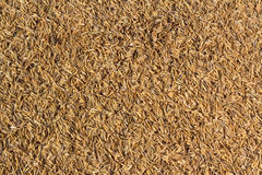 Rice chaff Royalty Free Stock Images