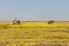 Rice combine harvesters Stock Photo
