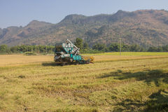 Rice combine harvesters Royalty Free Stock Photo