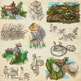Rice crop. Agriculture. An hand drawn illustration. Stock Images