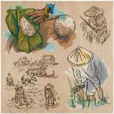 Rice crop. Agriculture. An hand drawn vector set. Stock Photos
