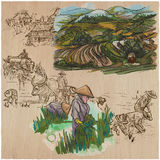 Rice crop. Agriculture. An hand drawn vector set. Stock Image