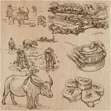 Rice crop. Agriculture. An hand drawn vector set. Royalty Free Stock Image