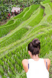 Rice cultivation in terraces Stock Image