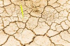 Rice on drought field Stock Photos