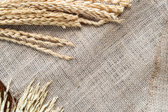 Rice drying on sackcloth background copy space for text input. Top view focus Royalty Free Stock Photos