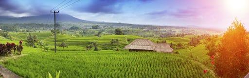 Rice drzewka palmowe i tarasy bali Indonesia obraz royalty free
