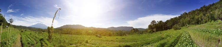 Rice drzewka palmowe i tarasy bali Indonesia zdjęcia royalty free
