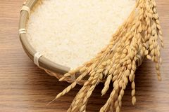 Rice and ear of rice Stock Photo