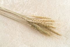 Rice with rice ears in the background royalty free stock photography