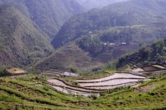 Rice espaliers. Rice fields occupy a large area in the northern mountains Stock Photos