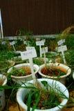 Rice experiment Stock Photo