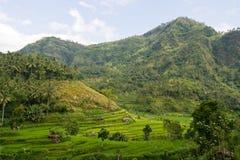 rice för bali liggandepaddy Fotografering för Bildbyråer