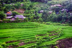 rice för fälthus Arkivfoto