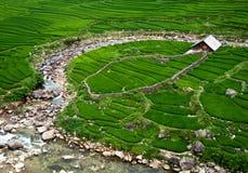 rice för fälthus Arkivfoton