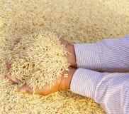 rice för handholdingjasmin Arkivbilder