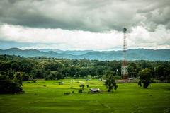 Rice Farm and antenna cellular Stock Photography