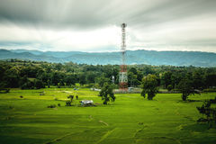 Rice Farm and antenna cellular Stock Images