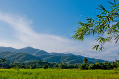 Rice farm with blue sky. Ricefarm road bluesky and moutain background Royalty Free Stock Photography