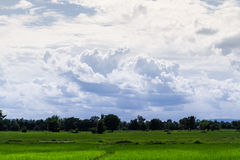 Rice farm. With bright sky Royalty Free Stock Images