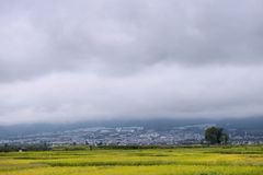Rice farm city landscape Royalty Free Stock Photography