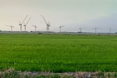 Rice farm with construction. Rice farm  green construction Royalty Free Stock Images