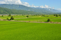 Rice farm in country. Rice farm in the country, Hualien, Taiwan, Asia Stock Images