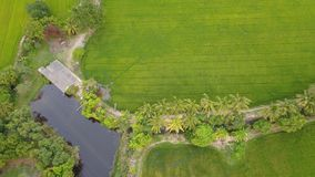 Rice Farm field which beautiful green color from rice plant. And view from top Stock Image