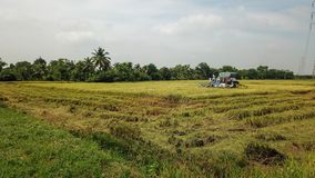 Rice farm on harvesting season by farmer with combine harvesters. And tractor on Rice field plantation pattern. photo by drone from bird eye view in countryside stock image