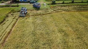 Rice farm on harvesting season by farmer with combine harvesters. And tractor on Rice field plantation pattern. photo by drone from bird eye view in countryside royalty free stock photos