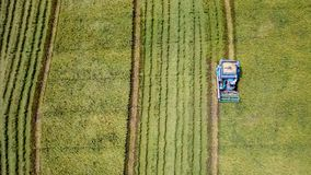 Rice farm on harvesting season by farmer with combine harvesters. And tractor on Rice field plantation pattern. photo by drone from bird eye view in countryside stock images