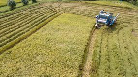 Rice farm on harvesting season by farmer with combine harvesters. And tractor on Rice field plantation pattern. photo by drone from bird eye view in countryside stock photography