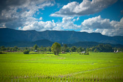 Rice Farm. Hut, large buddha statue and temple  on the mountain in Northern Thailand Stock Photo