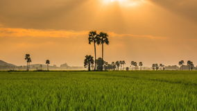 Rice Farm Landscape And Beautiful Sunbeam Time Lapse stock video footage