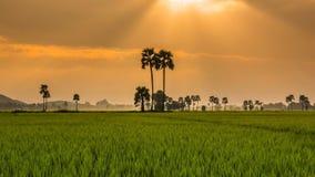 Rice Farm Landscape And Beautiful Sunbeam Time Lapse (pan shot) stock video