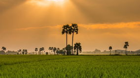 Rice Farm Landscape And Beautiful Sunbeam Time Lapse (zoom In) stock footage