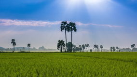 Rice Farm Landscape And Beautiful Sunbeam Time Lapse (zoom out) stock video footage