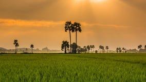 Rice Farm Landscape And Beautiful Sunbeam Time Lapse stock video