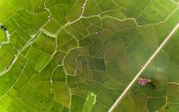 Rice farm. Map, Bird Eye View Royalty Free Stock Image