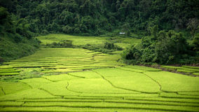 Rice farm on Mountain. In Kengtung province is culture of kengtung framer stock photography