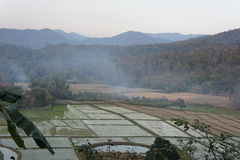 Rice farm. Royalty Free Stock Photo
