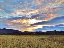 Rice farm. And sky Royalty Free Stock Photos