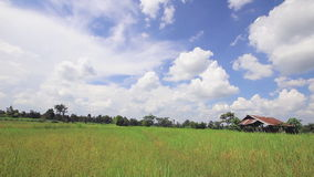 Rice farm with sky ,Time lapse stock video footage