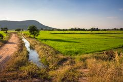 Rice farm. With soil road and water way in countryside of Thailand Royalty Free Stock Photo